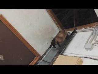 А кошка не глупая)