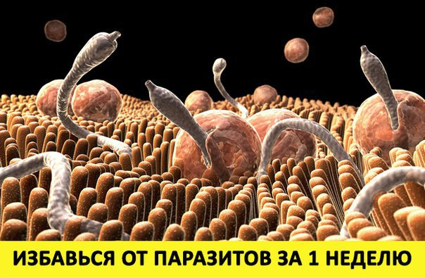 сыроедение шокирующий результат чистки от паразитов