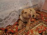 Лолитка в 5 лет , балуется с собачкой ))
