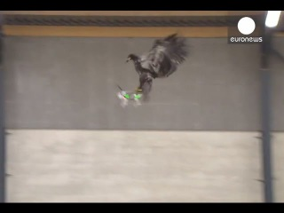 Police train birds of prey to catch ill-eagle drones, Netherlands