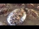 Покатай меня, большая черепаха! Бали
