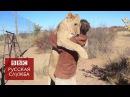 Львица радостно обнимает своего хозяина - BBC Russian