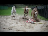 RACE THE WIND 22 - Greyhound Track (OffenbachGermany)  Galgo Levrier Windhund Dog Saluki Chasse