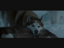 Nightwish - While Your Lips Are Still Red к к-ф Белый плен  Eight Below (2006)