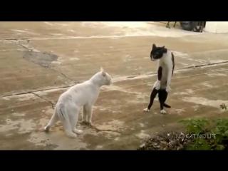 годовая подборка качественных видео приколов с кошками и котиками. Смотреть всем, смех до слез гарантирован.