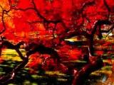 Caravelli orchestre-nostalgie