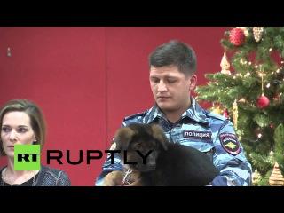 Россия: Добрыня полиция щенка передала Французскому послу.