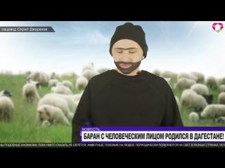 [Нетипичная Махачкала] Баран с человеческим лицом! Интервью овцевода