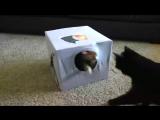 5 полезных советов для тех у кого дома есть котейка.