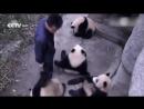 От детенышей просто отвяжешься Кунг фу панда 3 Хороший юмор смех да и ржака только Новинки на сегодня шутка дня я плакал прикол