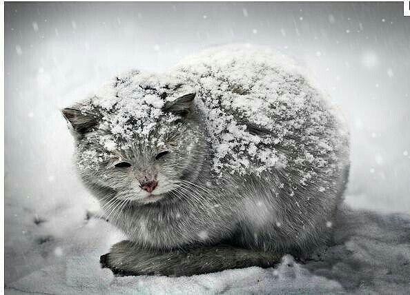Скоро настанут холода... Пожалуйста, во время покупок, купите одну-две дешевые с...