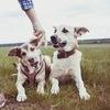 Плохие собаки