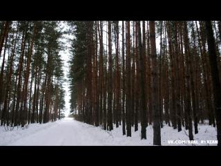 Зимний лес в Алеканово (Рязанская обл.)