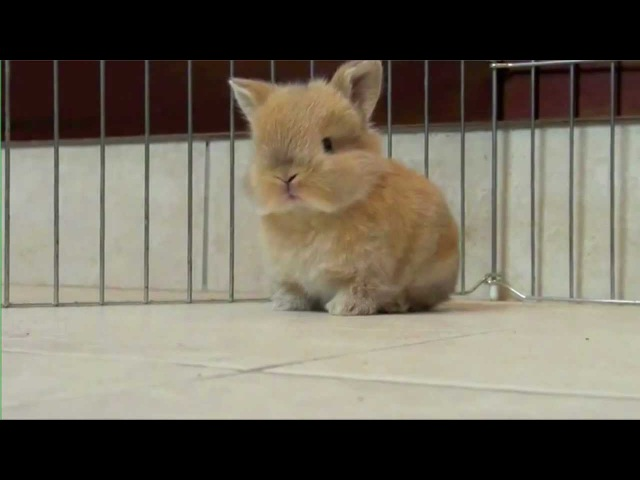 Baby Bunny - Parry Gripp