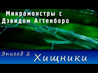 Микромонстры с Дэвидом Аттенборо. Эпизод 2 - Хищники (2013) | HD 720p