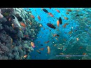 OCEAN DREAMING DVD - Relaxing Nature Scenes Of The Underwater