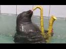 Super cute Baikal seals master sax playing painting