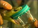 Змеи Австралии - Укус Тайпана и Нападение Коврового питона