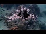 Морская лилия  Feather star  Sea Lily  Pattaya Divers