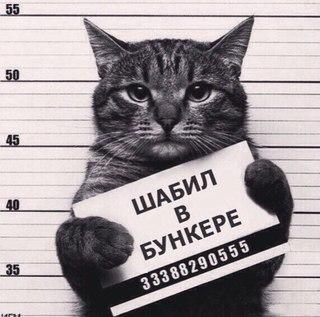 Порно Гей Знакомства Вконтакте Г Махачкала