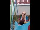 Собака катается на качели