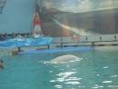 Белый дельфин(Белуха)-Полина