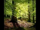 Ада Якушева. Я приглашаю вас в леса