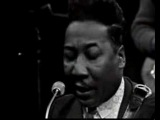 Muddy Waters &amp James Cotton - You Can't Loose What...