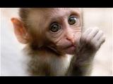 Самая смешная обезьяна,  приколы про обезьян