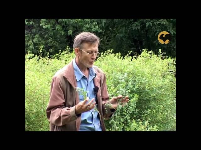 Сад и огород-104 Мелисса