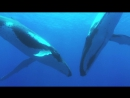 Дельфины и киты (Dolphins and Whales: Tribes of the Ocean, 2008)