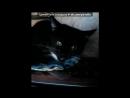 «Мои кошки и коты» под музыку NYUSHA / Нюша - Выбирать чудо .