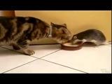 приколы про животных Все в одном видео  Смех до слёз