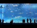 Kuroshio Sea - 2nd largest aquarium tank in the world - (song is Please Don't Go by Barcelona)