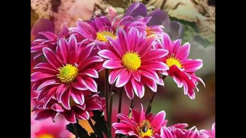 Andrea Bocelli Katharine McPhee / Can't Help Falling In Love - Не могу не влюбиться
