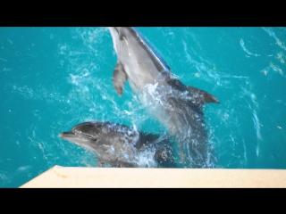 Подборка СУПЕР-трюков дельфинов