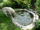 Odi w swoim basenie