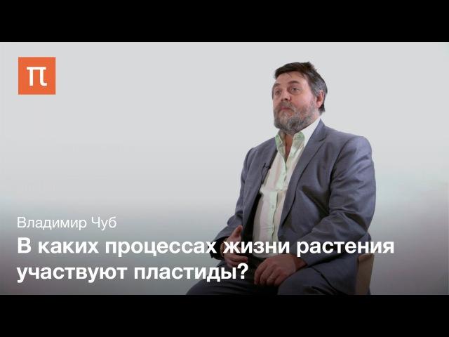 Пластиды Владимир Чуб