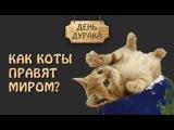 Как коты правят миром? - День дурака