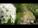 Час рікою пливе - Українська пісня