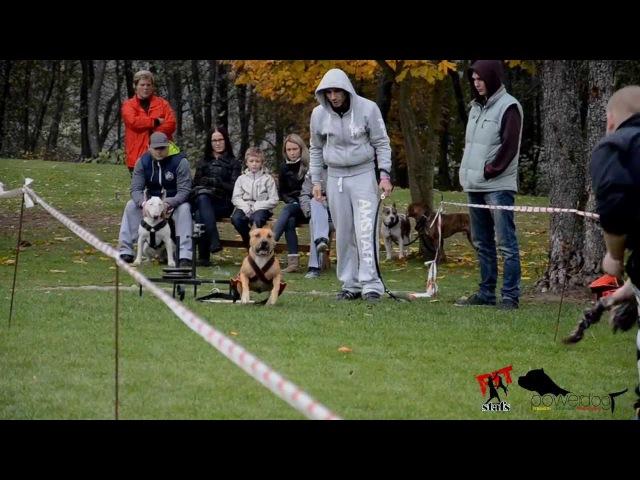 AMSTAFF TEAM LATVIJA PIT STAFS powerdog 2 posms