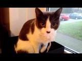 Funny cat reacts to camera   Смешная реакция кота на камеру