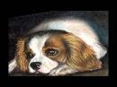В. Моцарт Турецкий марш (Красивые собаки)