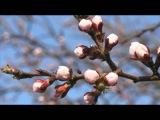 Антонио Вивальди (Antonio Vivaldi).Времена года. Весна.