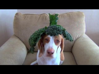 100 fruits  vegetables on dogs head in 100 seconds- cute dog maymo