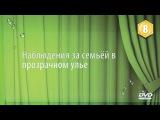 8 DVD  Наблюдения за семьёй в прозрачном улье