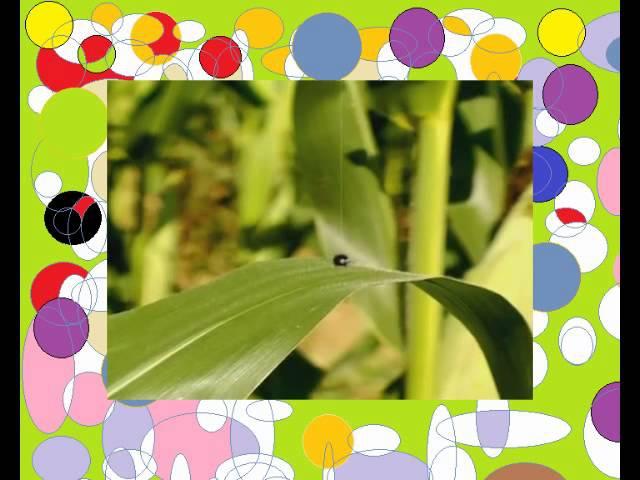 Насекомые букашки 27 Катапульта