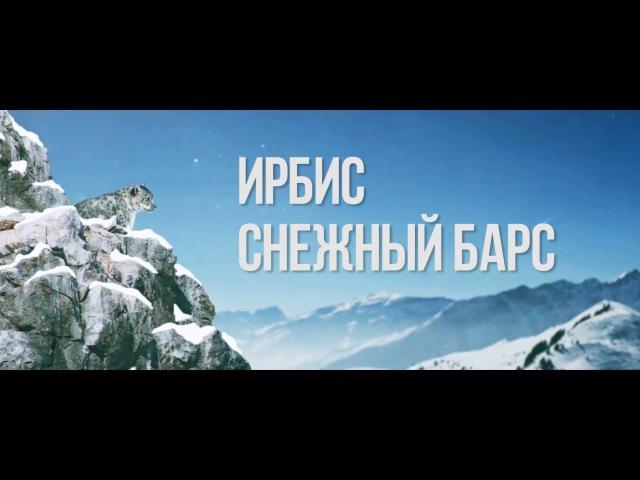 Ирбис Снежный Барс