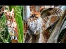 Transformer Owl The Original Documentary