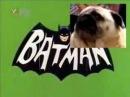 Собака зовет Бэтмена.flv
